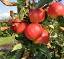 Fruitkwekerij verhage